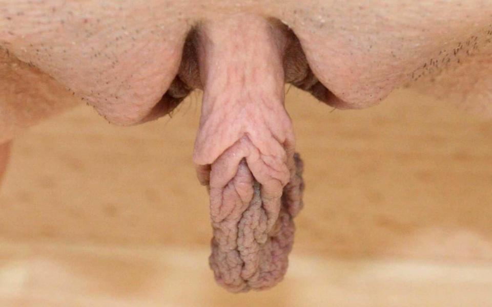 фото член половой женская пизда