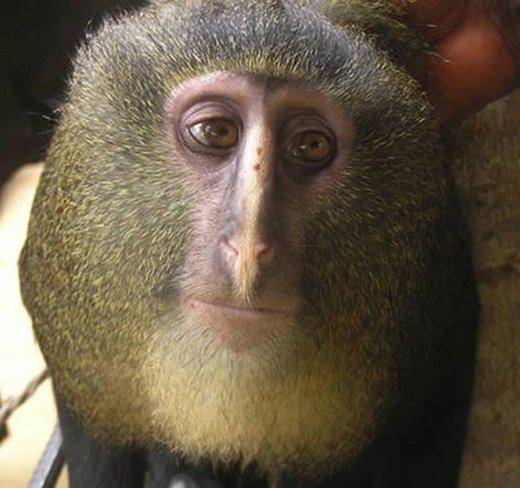 new monkey discovered full size